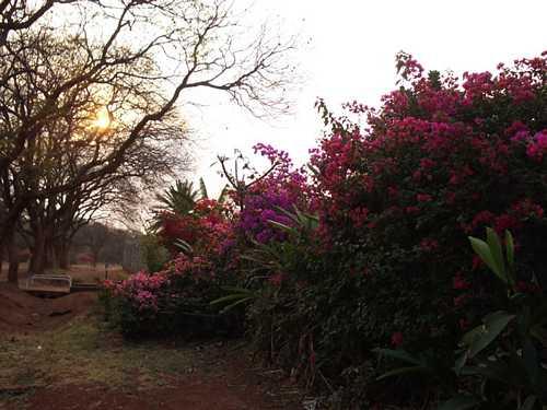 August in zimbabwe for Mirror zimbabwe